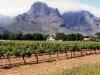 winelands_4