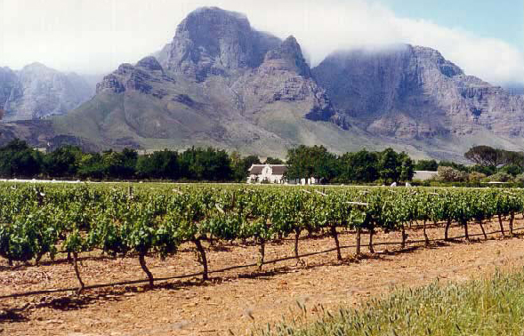 winelands_4