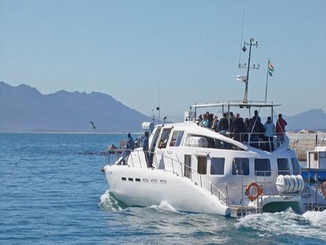 Cape peninsula boat ride