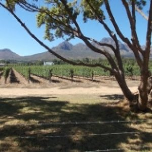 Cape scenic tour winefarm