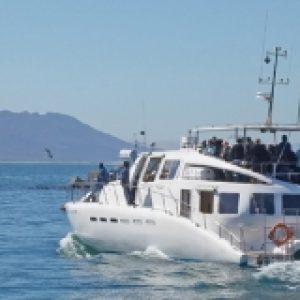 Cape scenic tours boat ride