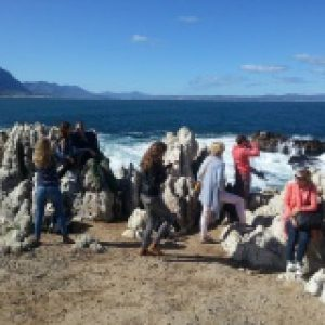 Whale route tour The hermanus coastline